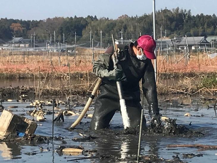 レンコン収穫用手袋『ハッスル No.750』新発売!!!